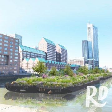 Hoe geef je biodiversiteit een kans in Rotterdam?